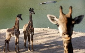 Scientists go to zoo, find that cell size, not body size, affects lifespan